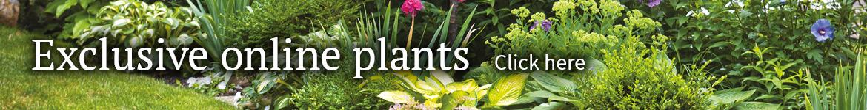 Online exclusive plants