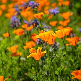 Flower seeds
