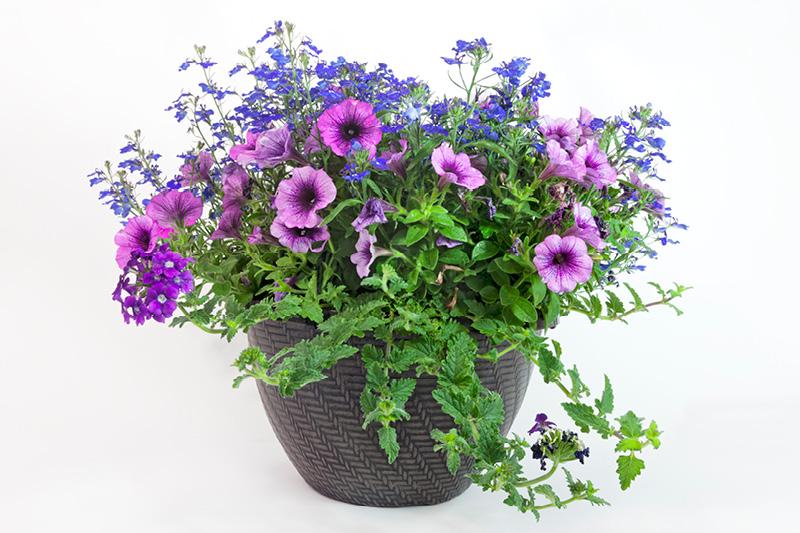 Create a vibrant spring planter