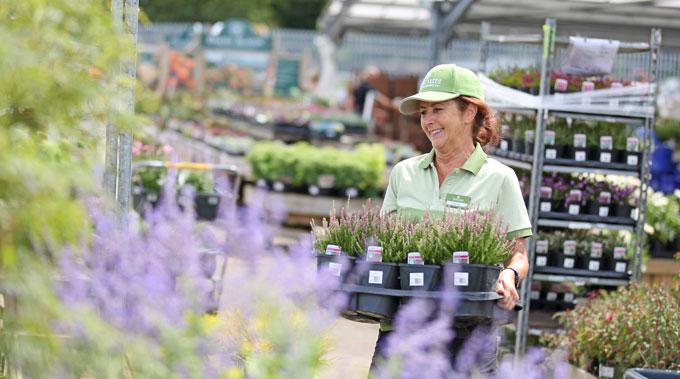 Notcutts Garden Centre Colleague