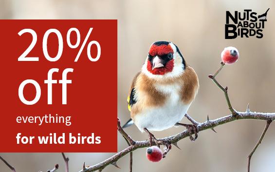 Wild bird sale - nuts about birds