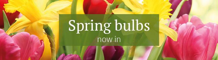 Spring Bulbs now in
