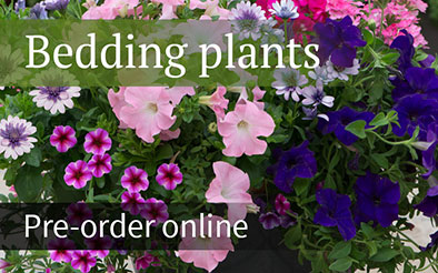 Bedding plants - pre-order now