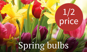Spring bulbs half price