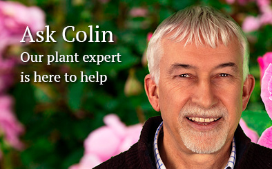 Ask Colin