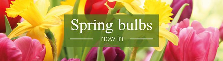 Sprin Bulbs now in