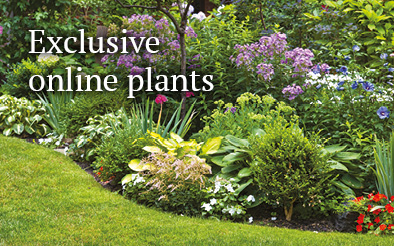 Exclusive online plants