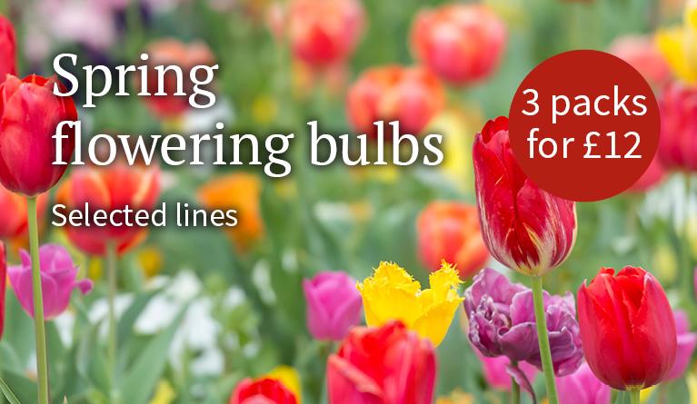 Spring flowering bulbs - 3 packs for £12