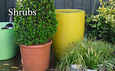 Plants - shrubs