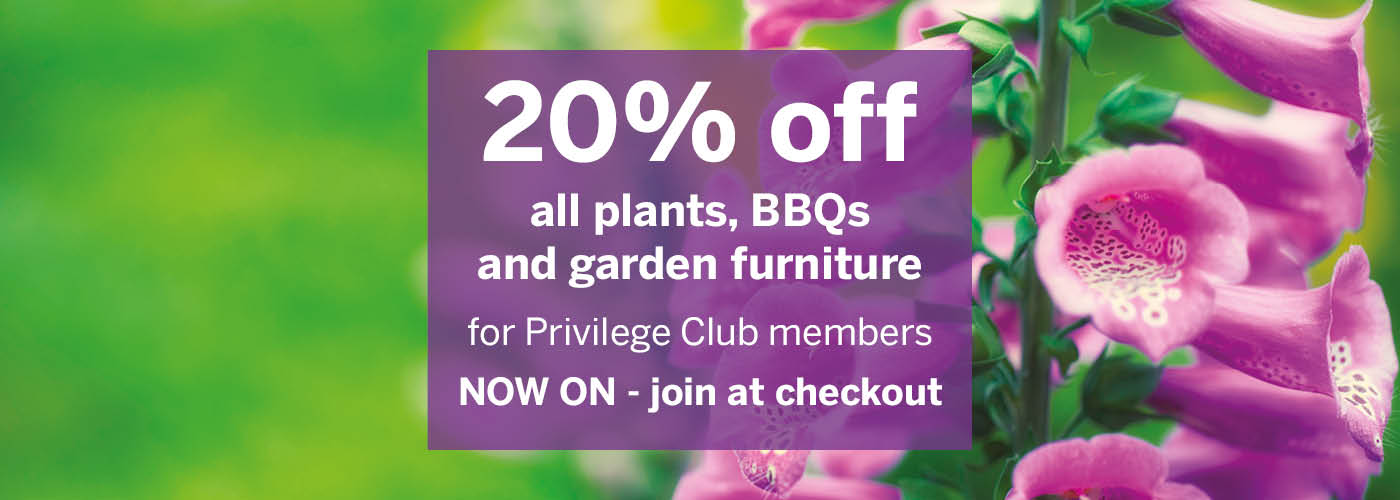 20% off event Privilege event - Now on