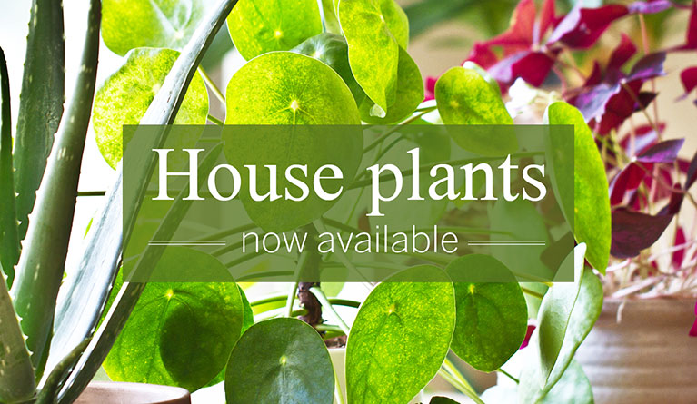 House plants now available
