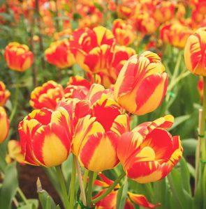 April gardening guide
