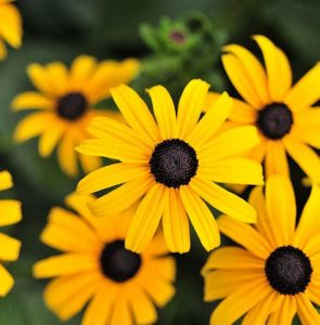 August gardening guide