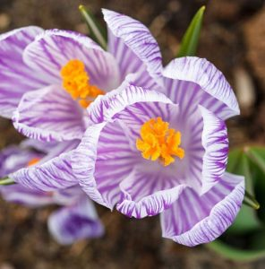 February gardening guide
