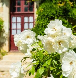 Fragrant garden