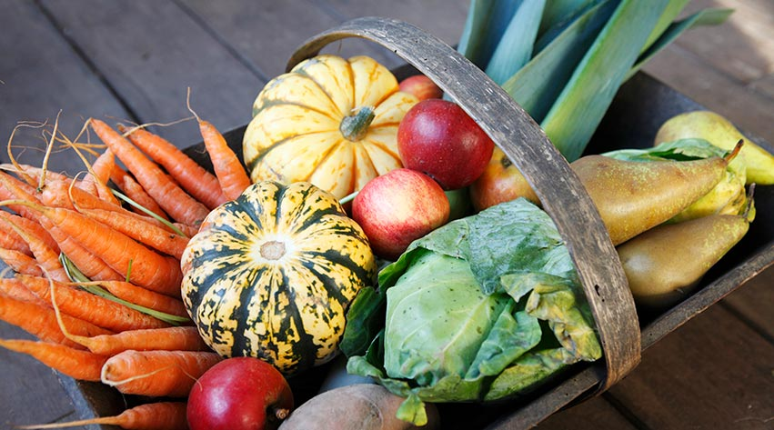 How To Harvest Fruit And Vegetables