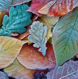 November gardening guide