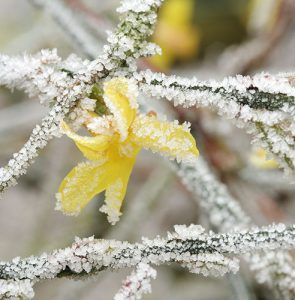 How to protect your garden in winter
