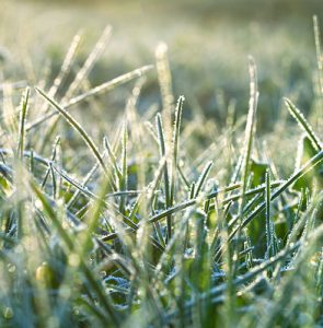 How to repair your lawn after winter