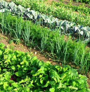 Top 10 tips for setting up a vegetable patch