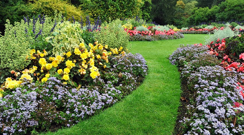 How To Plant Bedding Plants, What Is Meant By Bedding Plants
