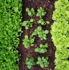 What to grow by soil type