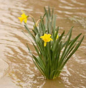 Waterlogging, flooding and overwatering