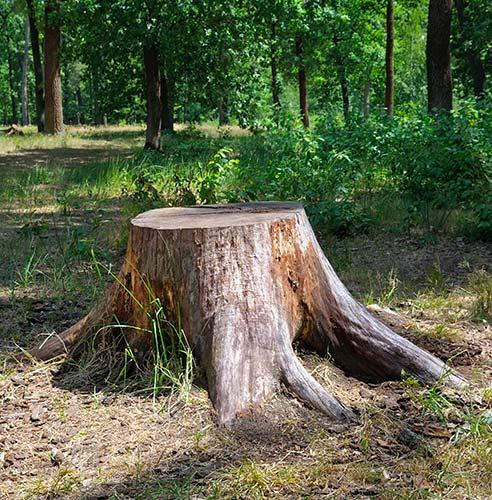 Tree Stumps, Tree Trunk Garden Furniture Uk